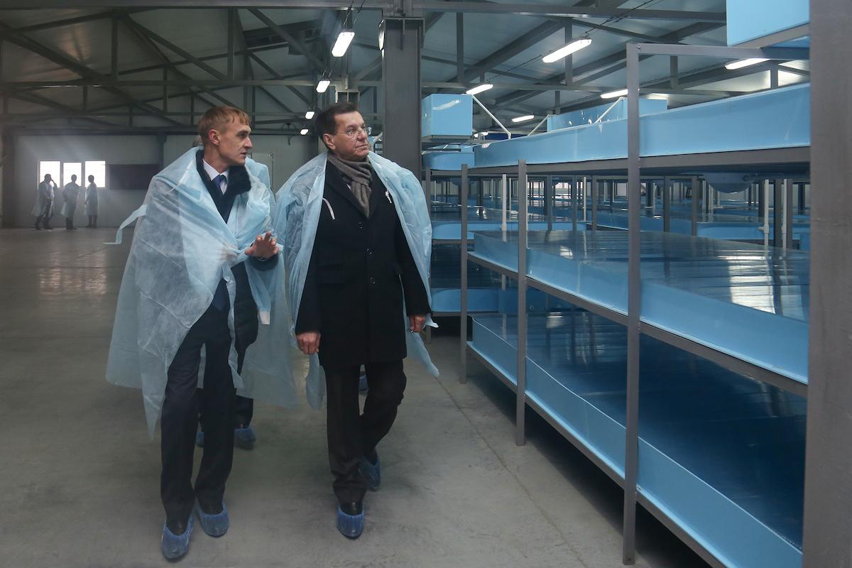 помидором украсить ферма по разведению раков фотографии города